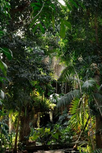 Grandes-Serres-du-Jardin-des-Plantes 4 © Manuel Cohen.jpg